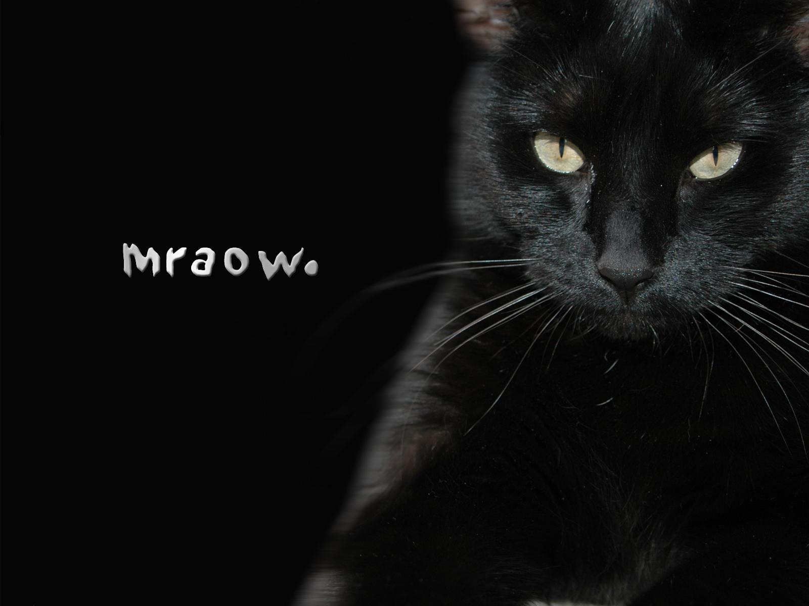 black_cat_26070