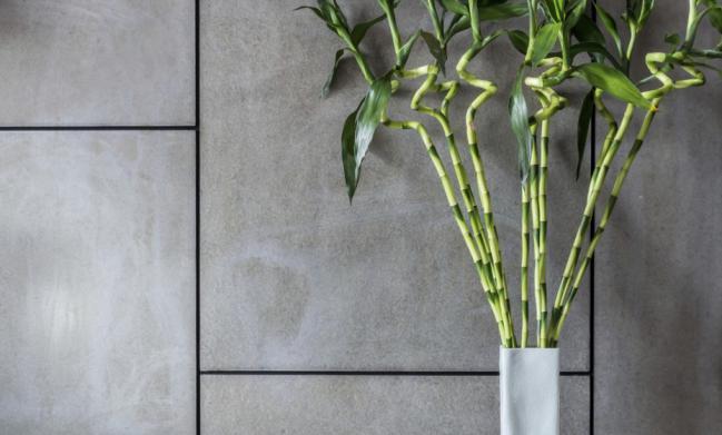 plantas-de-interior-para-amas-de-casa-olvidadizas-8
